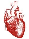 Mänsklig hjärtateckningslinje arbete Royaltyfria Foton