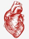 Mänsklig hjärtateckningslinje arbete Royaltyfri Fotografi