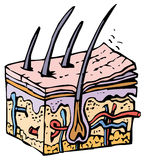 mänsklig hud vektor illustrationer