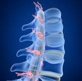 Mänsklig inbindningsröntgenstrålesikt, stock illustrationer