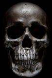 mänsklig läskig skalle Arkivbild