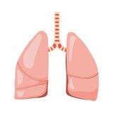Mänsklig lungavektor royaltyfri illustrationer