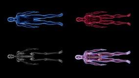 Mänsklig manlig för animeringbiologi för anatomi 3D teknologi för vetenskap lager videofilmer