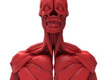 Mänsklig manlig muskelanatomi stock illustrationer