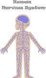 Mänsklig nervsystem för ungar royaltyfri illustrationer