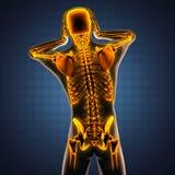 Mänsklig röntgenfotograferingbildläsning med glödande ben Arkivbild
