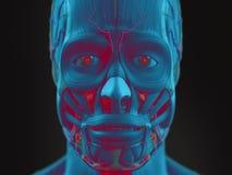 Mänsklig sikt för anatomisciencekonst av framsidan Royaltyfri Bild