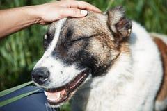 Mänsklig skämma bort hund royaltyfria foton