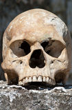 mänsklig skalle Royaltyfria Bilder