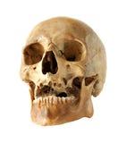 Mänsklig skalle. Arkivbilder