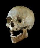 Mänsklig skalle. Royaltyfri Fotografi