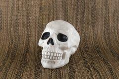 mänsklig skalle Arkivfoto
