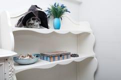 Mänsklig skalle i ett vitt kabinett Royaltyfri Foto