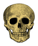 Mänsklig skalle i inristad stil Royaltyfria Bilder