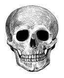 Mänsklig skalle i inristad stil Royaltyfri Fotografi