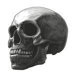 Mänsklig skalle i träsnittstil Royaltyfri Foto