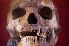 Mänsklig skalle med mörk bakgrund Begrepp av död, fasan och anatomi Spöklikt halloween symbol Arkivbild