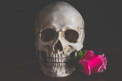 Mänsklig skalle med röda rosor Royaltyfri Fotografi