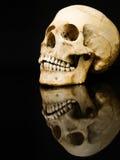 Mänsklig skalle med spegelbild på svart Fotografering för Bildbyråer
