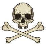 Mänsklig skalle med två korsade ben som isoleras på vit bakgrund Vektorillustration i hand dragen stil Arkivbild