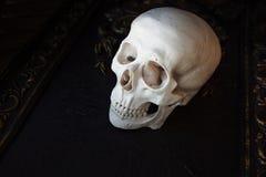 Mänsklig skalle på bakgrunden av modeller Svart bakgrund, allhelgonaaftonbegrepp royaltyfria foton