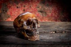 Mänsklig skalle på gammal wood bakgrund, royaltyfri bild