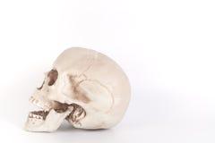 Mänsklig skalle på isolerad vit bakgrund Arkivfoto