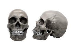Mänsklig skalle på isolerad vit bakgrund Arkivfoton