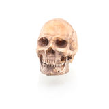 Mänsklig skalle på isolerat Royaltyfri Foto