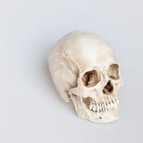Mänsklig skalle på vit bakgrund, vid Royaltyfri Fotografi