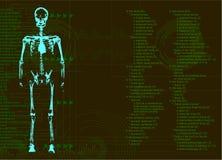 mänsklig stråle för huvuddel x vektor illustrationer