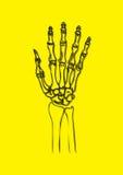 mänsklig strålvektor x för hand Arkivfoto