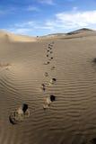 mänsklig trail Royaltyfri Foto