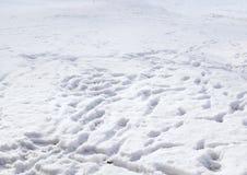 Mänskliga fotspår i snön Royaltyfria Foton