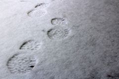 mänskliga fotspår på den första snön arkivfoton