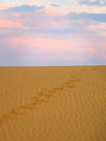 Mänskliga fotspår på sanden Royaltyfria Bilder