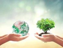 Mänskliga händer som rymmer den gröna planeten och trädet Arkivfoto