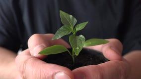 Mänskliga händer som rymmer den gröna små växten ny begreppslivstid 4K UltraHD, UHD
