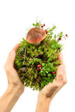 Mänskliga händer som rymmer den gröna unga växten på vit bakgrund Arkivbild