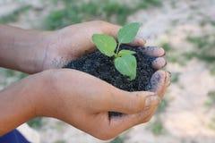Mänskliga händer som rymmer nytt livbegrepp för grön liten växt. Royaltyfri Bild