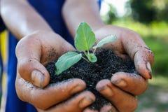 Mänskliga händer som rymmer nytt livbegrepp för grön liten växt. Fotografering för Bildbyråer