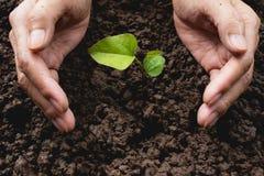Mänskliga händer som skyddar grönt litet begrepp för växtliv Arkivfoton