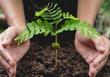 Mänskliga händer som skyddar grönt litet begrepp för växtliv arkivfoto