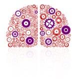 mänskliga hjärnhalvklot Arkivfoton