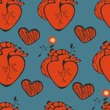 Mänskliga hjärtamodeller fotografering för bildbyråer