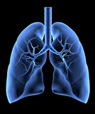 Mänskliga lungor Royaltyfri Bild