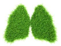 Mänskliga lungor i form av grönt nytt gräs Arkivfoto