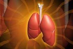 mänskliga lungs stock illustrationer