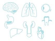 mänskliga organ Medicin stock illustrationer