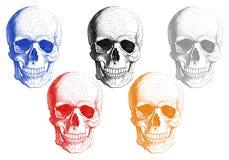Mänskliga skallar, vektoruppsättning Arkivfoto